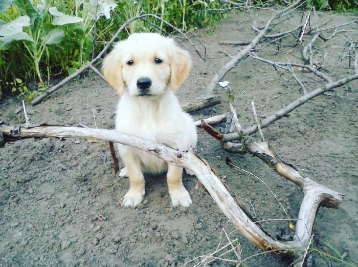 Немного из жизни Оскара) Моё, Собака, Оскар, Собачья дружба, Длиннопост