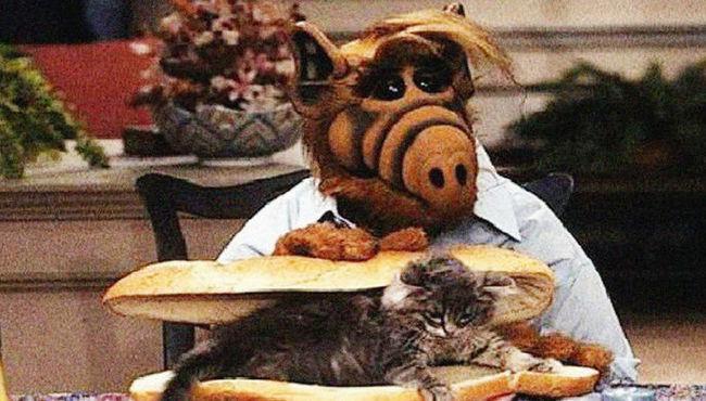 Питающийся кошками инопланетянин Альф вернется на экраны Альф, Сериалы, Перезапуск