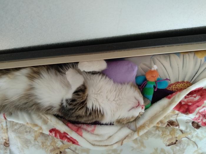Утомленный котик Сон, Кот, Игры, Еще раз котики