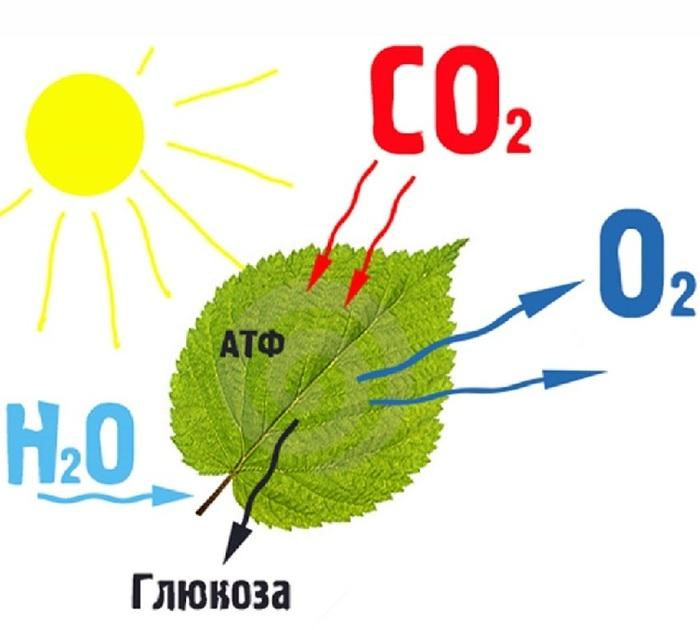 Парниковый эффект отменяется Глобальное потепление, Парниковый эффект, Длиннопост