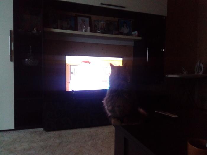 Когда коська тоже любит смотреть гриффинов:)
