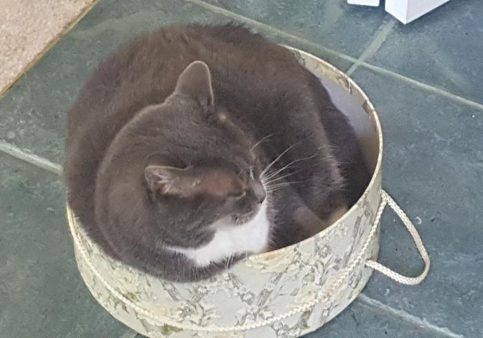 Меховая шляпа. Кот, Коробка, Инь-Ян, Маловато будет