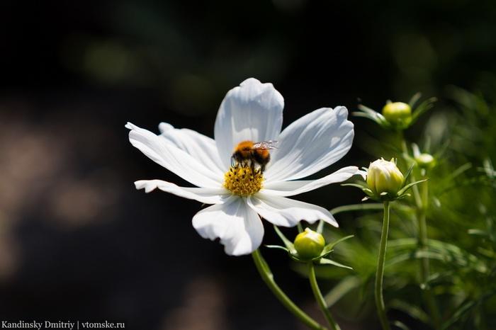 Ученые томского вуза начнут создавать роботов-пчел в 2019 году Томск, ТПУ, Распил бюджета, Инновации, Новости