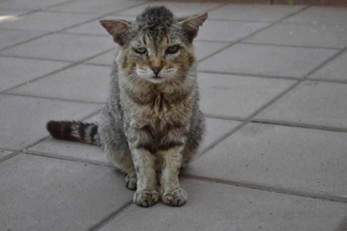Уличные коты Оренбуржья Фотография, Кот, Длиннопост