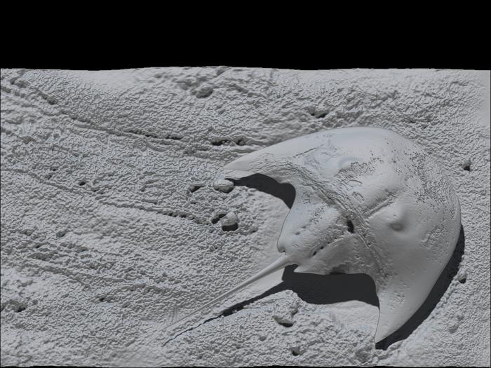 Новый вид ископаемого мечехвоста назван в честь Дарта Вейдера Zbrush, 3ds max, Фотоманипуляции, Доисторические животные, Триасовый период, Копипаста, Длиннопост