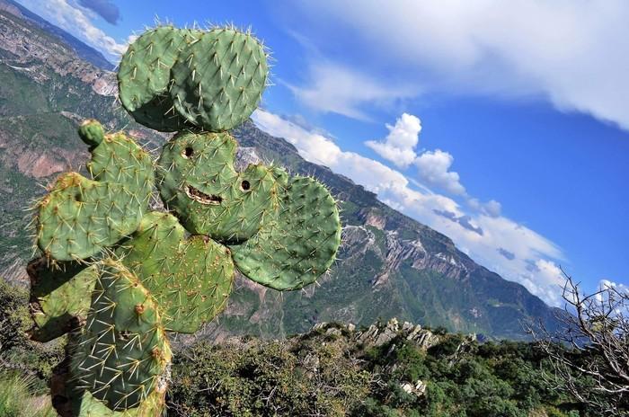 """""""Я нашел это счастливый кактус когда ходил в поход"""" Reddit, Чебурашка, Кактус, Парейдолия"""