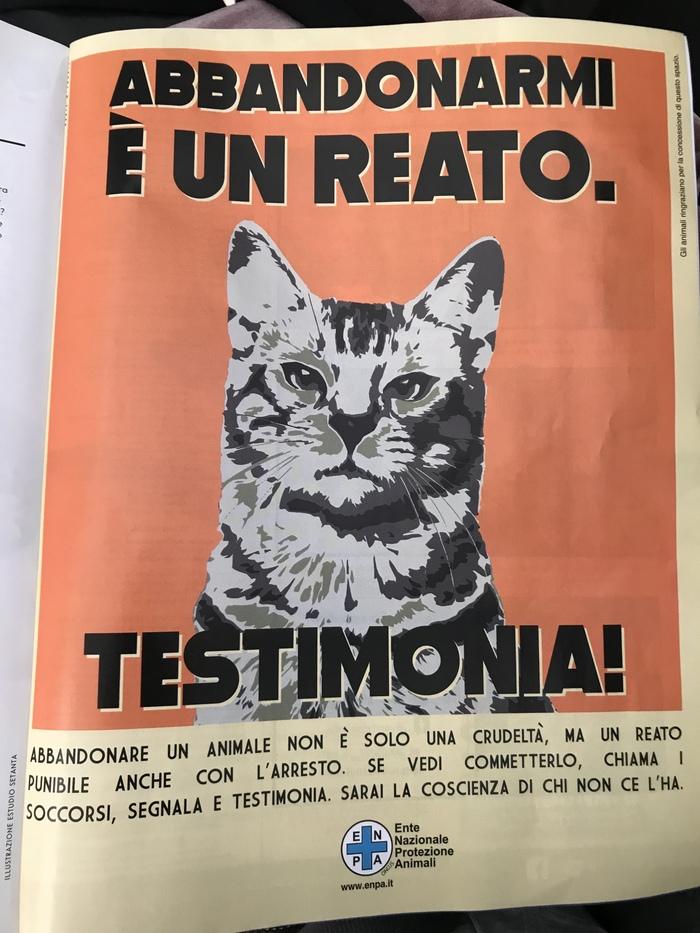 «Выбросить меня на улицу - это преступление, наказуемое вплоть до ареста» Спасение животных, Животные, Закон, Италия, Итальянский, Плакат, Защита животных