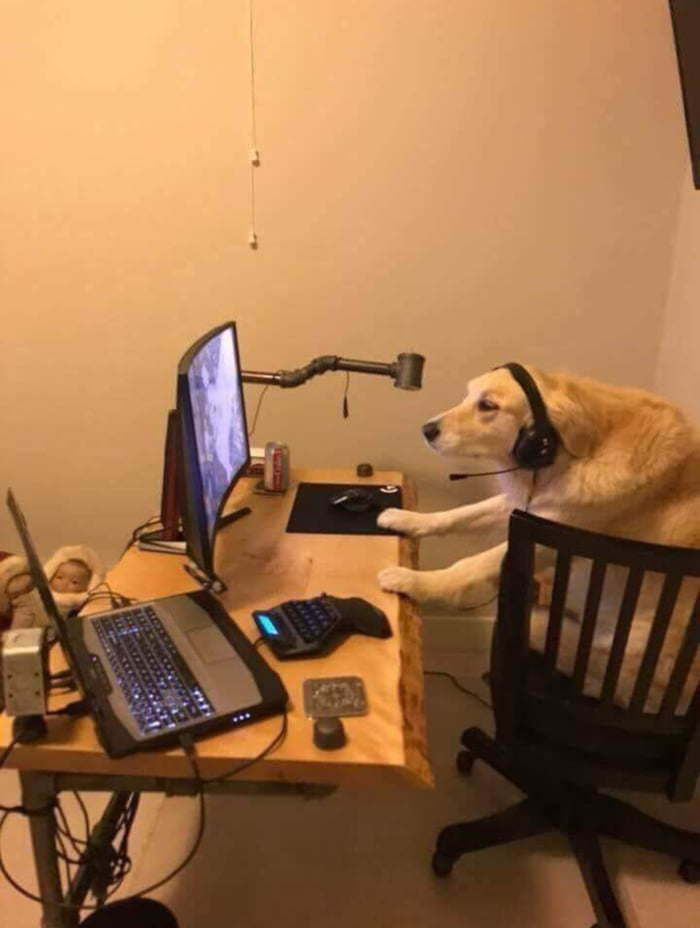 В интернете никто не узнает что ты пёс