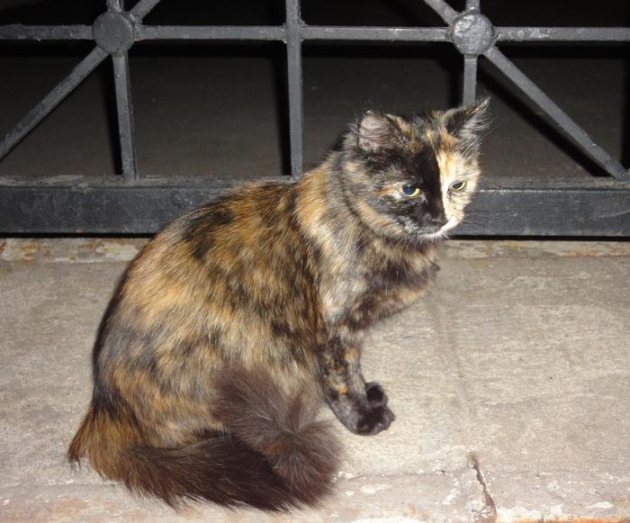 Кошка перфекциониста Кот, Перфекционизм, Чудеса природы, Длиннопост