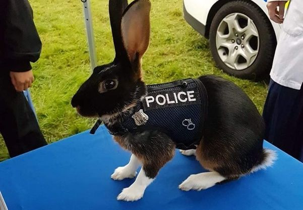 Полиция Англии опубликовала фотографию кролика в форме. Reddit, конечно же, не спит. Полиция, Кролик, Фотожаба, Reddit, Длиннопост, Англия