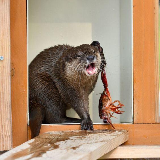 Официант, этот лобстер настолько не готов, что пытается напасть на меня!