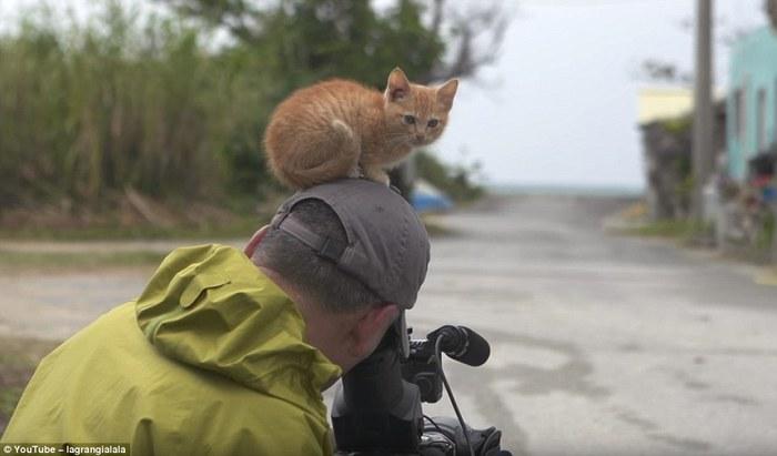 Любознательные животные из дикой природы Daily Mail, Фотография, Животные, Длиннопост