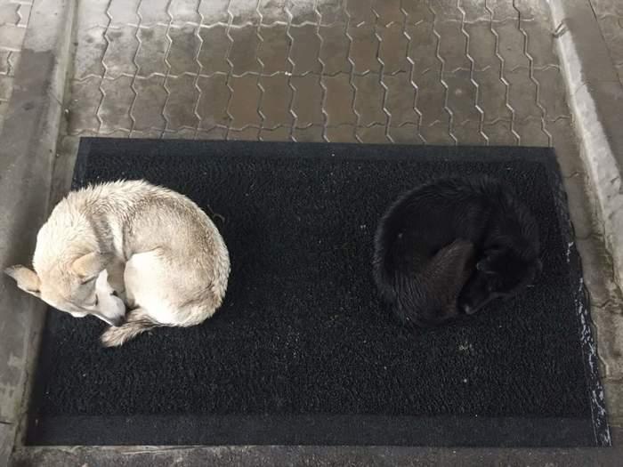 Инь-янь Собака, Дождь, Инь-Ян