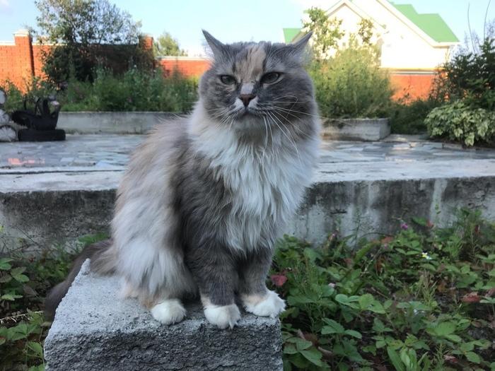 Королева грядок Кот, Животные, Клубника, Длиннопост