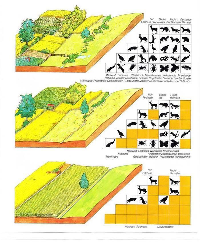 Биоразнообраие наглядно Животные, Биоразнообразие, Урбанизация, Сельское хозяйство