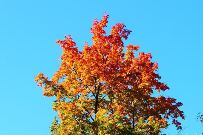 Осеннее настроение. Начинающий фотограф, Осень, Закат