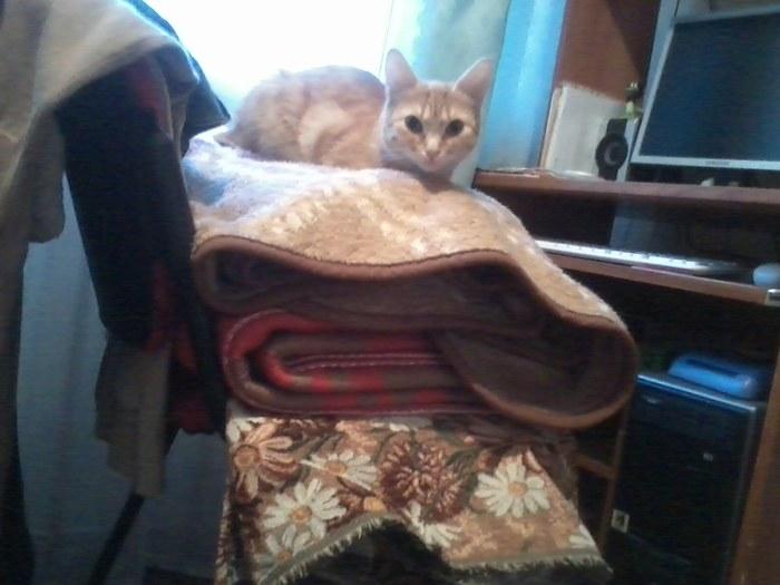 Кот или не кот?!? Кот, Приют для животных, Не понимаю