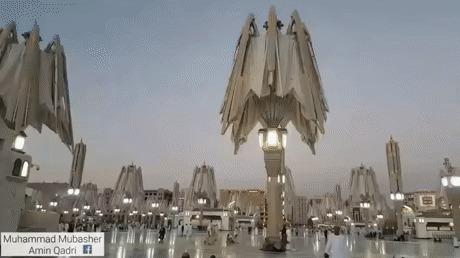 Огромные зонтики от жары
