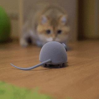Она что, живая? Кот, Компьютерная мышка, Reddit, Гифка