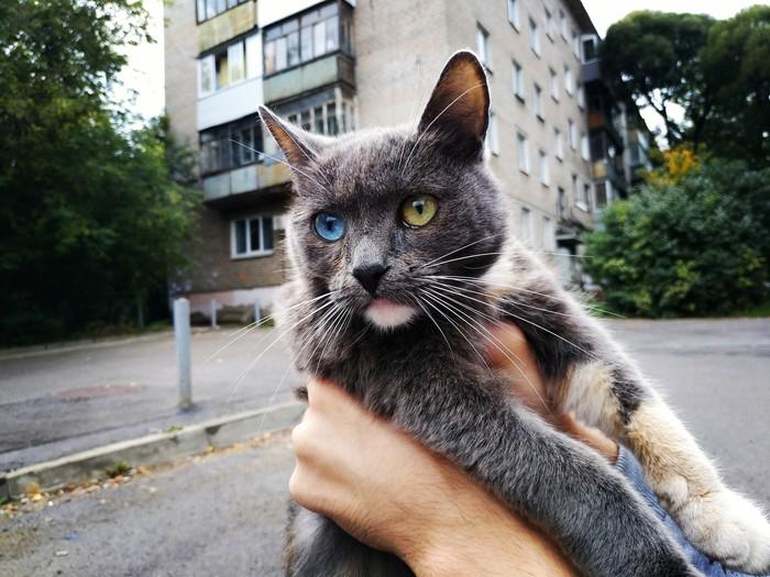 Кошки в объективе Начинающий фотограф, Хочу критики, Кот, Объектив, Фотография, Длиннопост