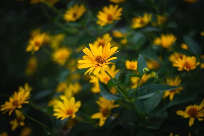 Цветок. Осень, Цветок, Фотография