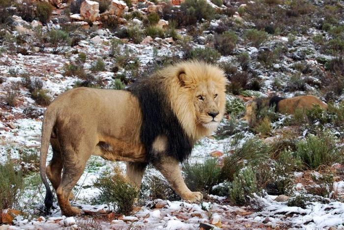 В Южной Африке внезапно выпал снег. Снег, Зима, Африка, Холод