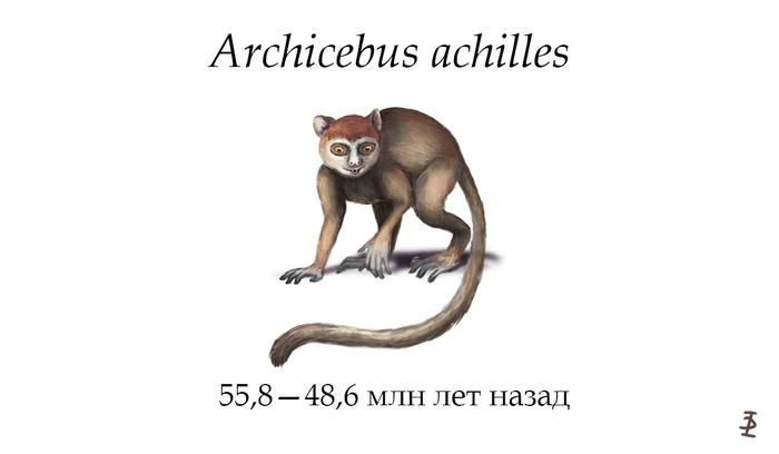 Archicebus achilles Archicebus achilles, Антропология, Antropogenez, Палеонтология, Noosphere Studio