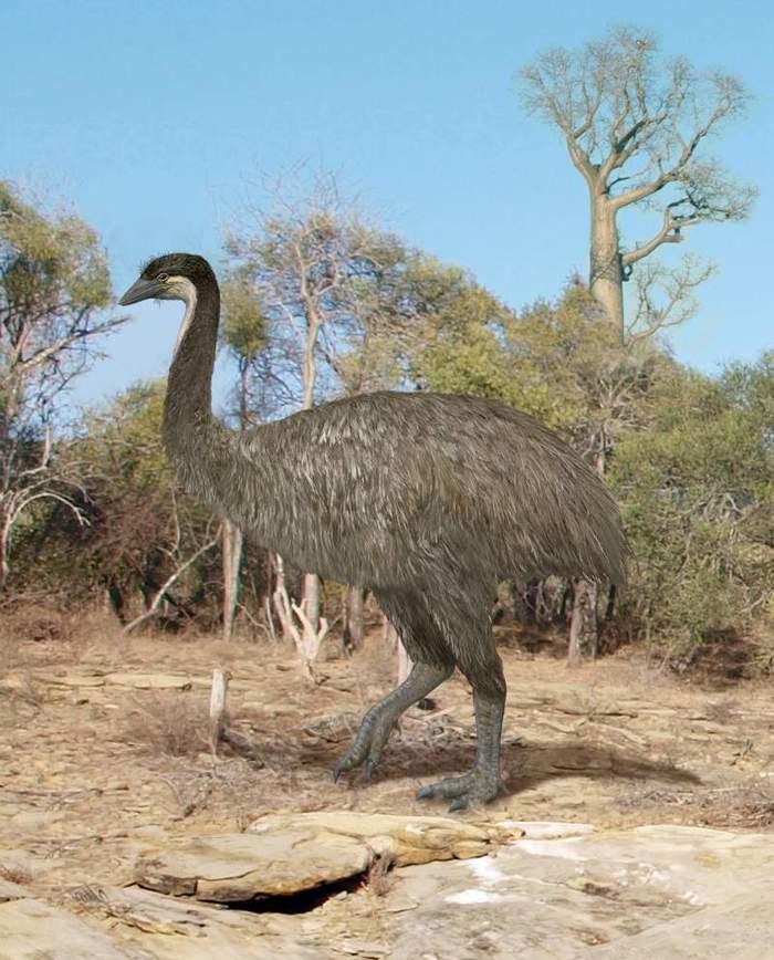 Судьба птицы Рух: Кто убил самых больших птиц, которые когда-либо жили? Палеонтология, Ископаемые, Наука, Эволюция, Длиннопост