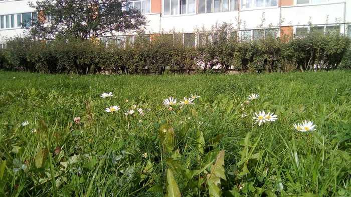 Питер, ты ли это ? Осень, Санкт-Петербург, Цветы, Проспект Ветеранов, Длиннопост