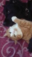 Укрощение Красти, или 2 килограмма меховой ярости. Кот, Красти, Собака, Барсений, Хэппи, Гифка, Длиннопост
