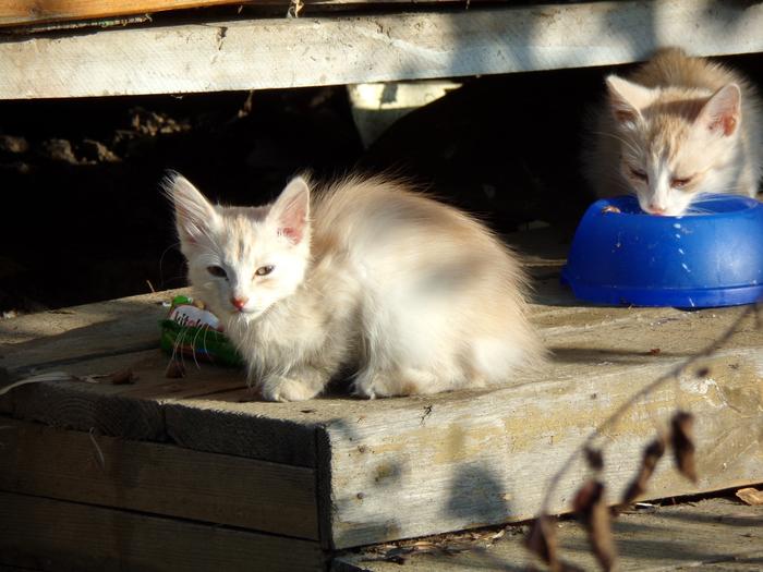 Ищем дом для котят (без рейтинга) Котята, Истра, Без рейтинга, Ищу дом, Длиннопост, Кот, Помощь