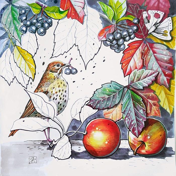 Дары осени Осень, Птицы, Черноплодка, Яблоки, Осенние листья, Скетч, Скетчбук, Рисунок