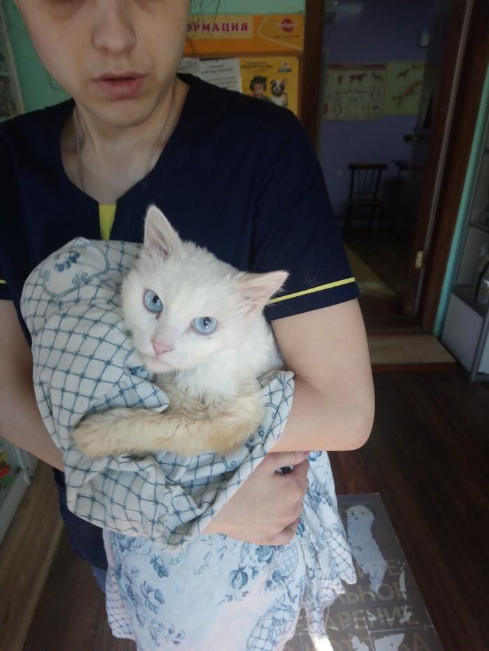 В Астрахани владелец отказался забирать кошку из ветклиники, узнав цену лечения Астрахань, Южная волна, Животные, Люди и кошки, Кошкин дом, Защита, Кот