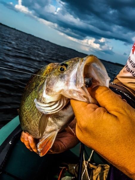 В погоне за крупным окунем Рыбалка, Микроджиг, Окунь, Беларусь, Длиннопост