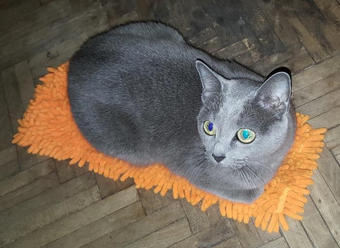 Я на коврике сижу...
