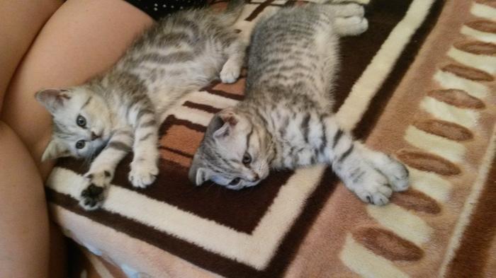 Просил жену отправить фото животных(сам на вахте) Кот, Животные, Не мешай человек