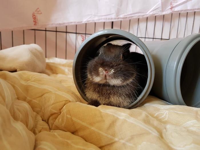 Аверс и реверс Домашний любимец, Кролик, Не еда