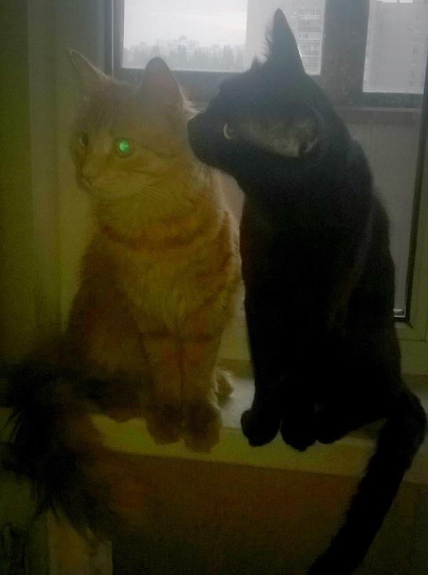 Когда обычные методы не действуют.... Моё, Кот, Что делать, Длиннопост