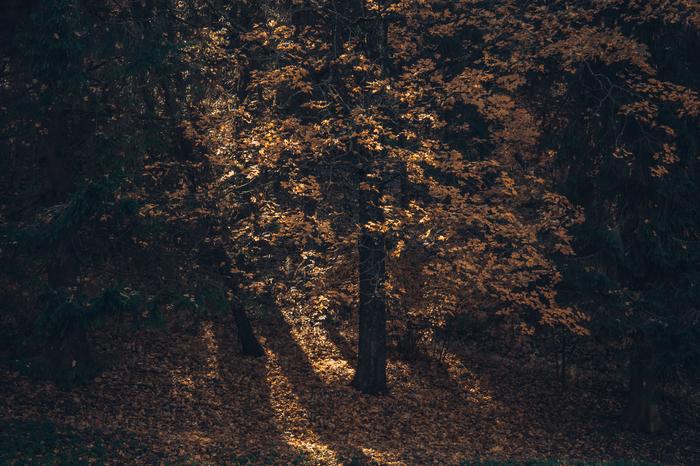 Осень в Павловском парке Фотография, Осень, Павловск, Санкт-Петербург, Парк, Длиннопост