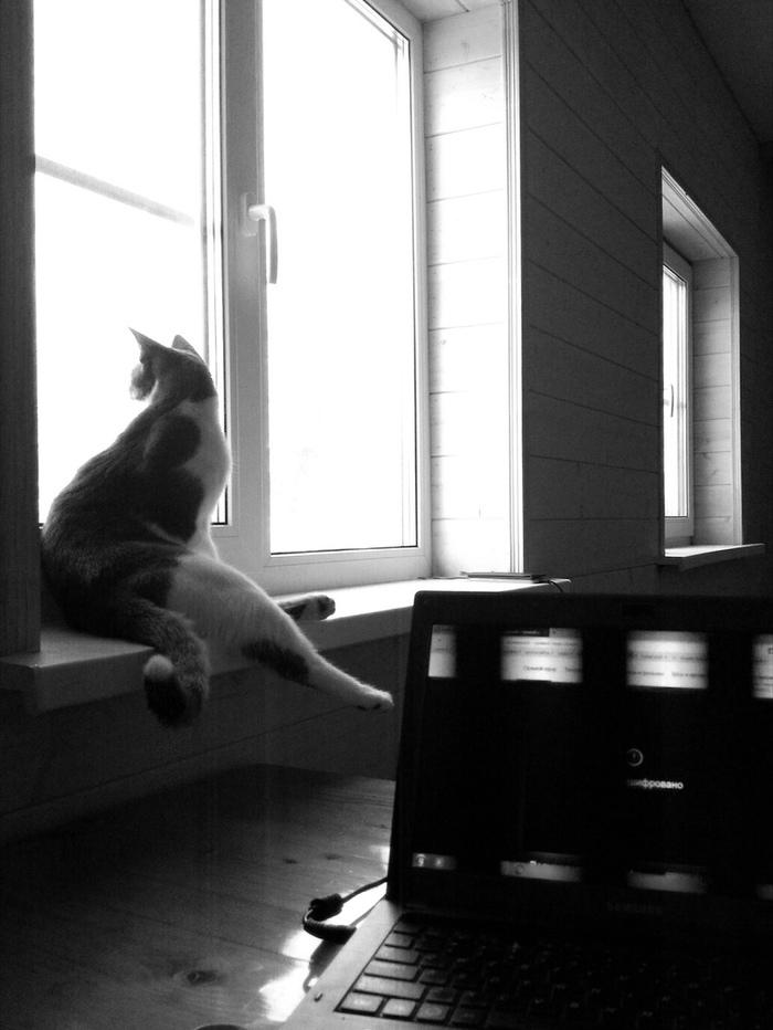 Загородная Жизнь Кота Саймона. Кот, Любимая дача, Камин, Релакс, Моя семья и другие животные, Длиннопост, Саймон