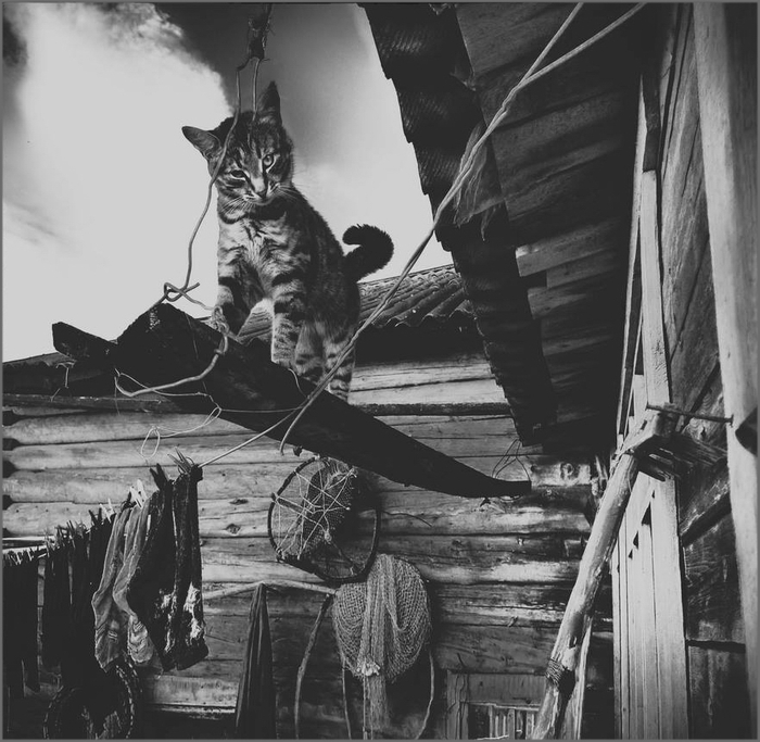 Я стою на краю... Кот, Котомафия, Фотография, Веревка