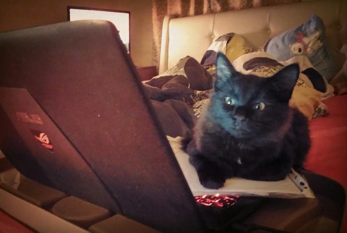 В интернете никто не знает, что ты кот.
