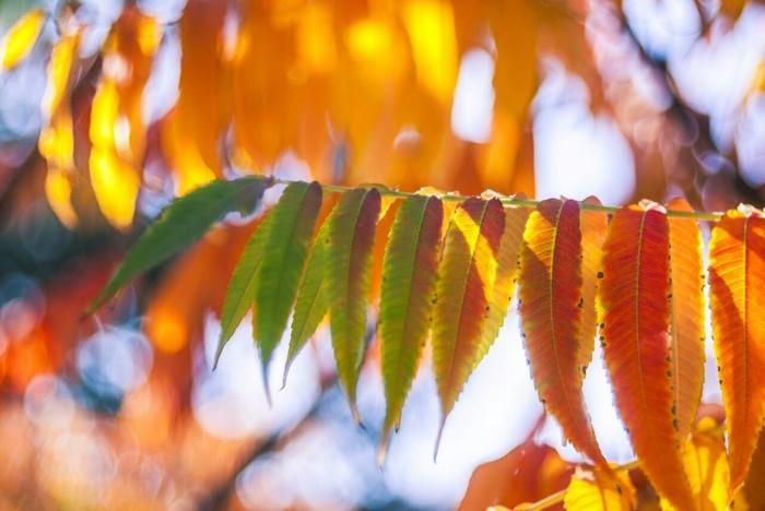 Осень загрузка