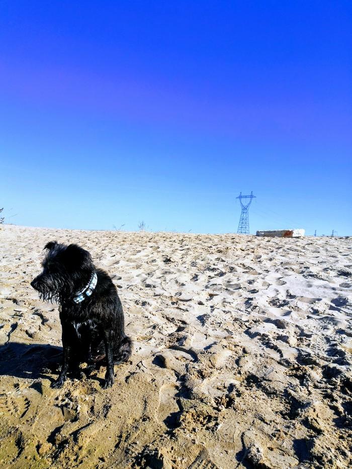Прекрасная осень Собака, Фотография, Google, Дон, Пляж