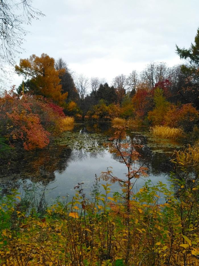 Осенний пруд.
