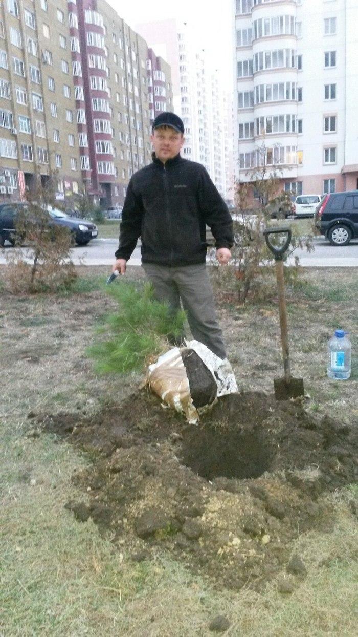 Николай Овчинников посадил во дворе многоэтажки 50 хвойных деревьев Курск, Длиннопост, Волонтерство, Садоводство, Видео
