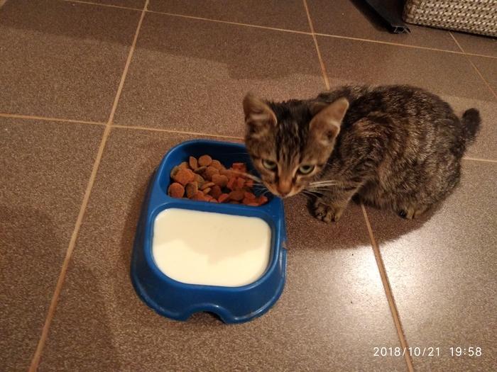 Одним бродячим котом меньше. :) Кот, Приблуда, Длиннопост