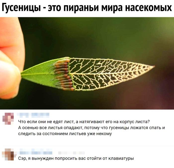 Гусеницы, альтернативная реальность.