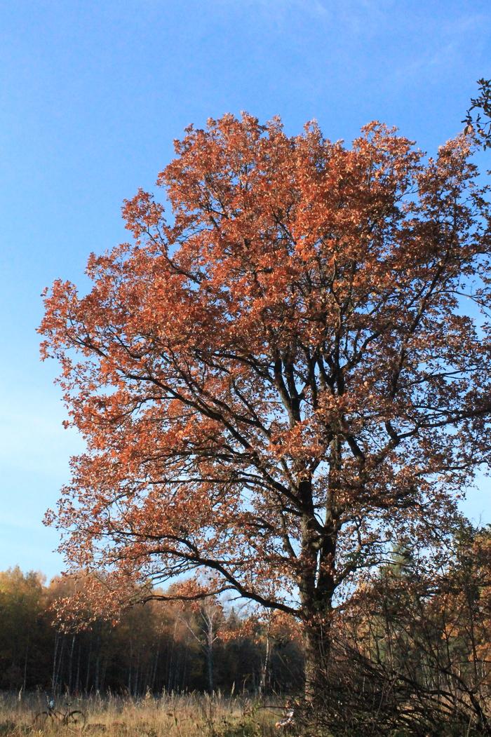 Лесные тропинки Фотография, Лес, Осень, Лосиный остров, Длиннопост