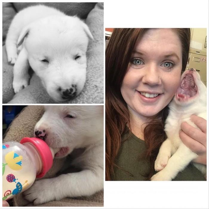 Слепой и глухой пес каждый день встречает хозяина с работы. Собака, Животные, Добро, Милота, Длиннопост, Слепота, Глухота